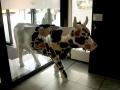 Cowparade-5